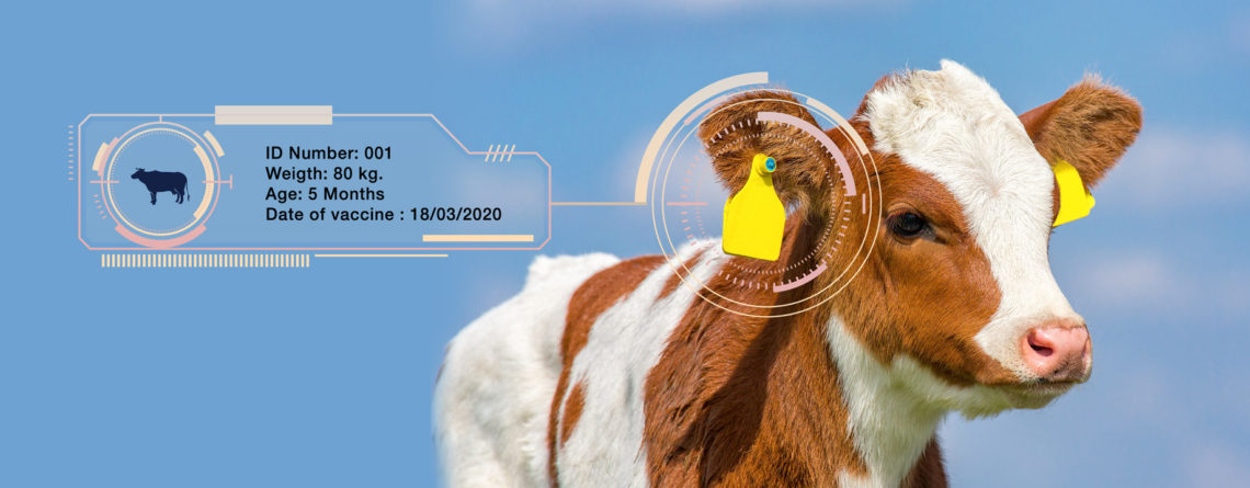 Animal ID-Smart Farm