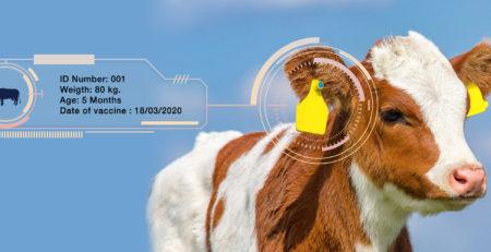 Animal ID-Smart Farm
